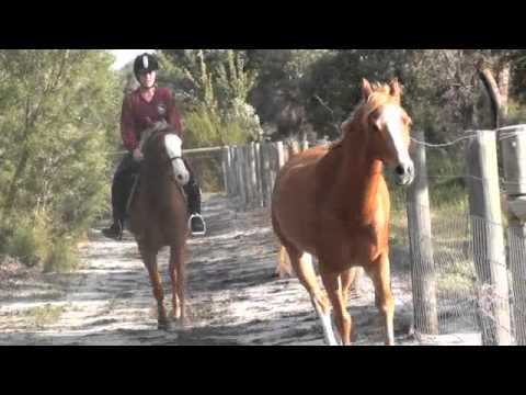 how to exercise a horse without riding it 2