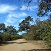Enroute to Mopani Camp, Kruger National Park, South Africa
