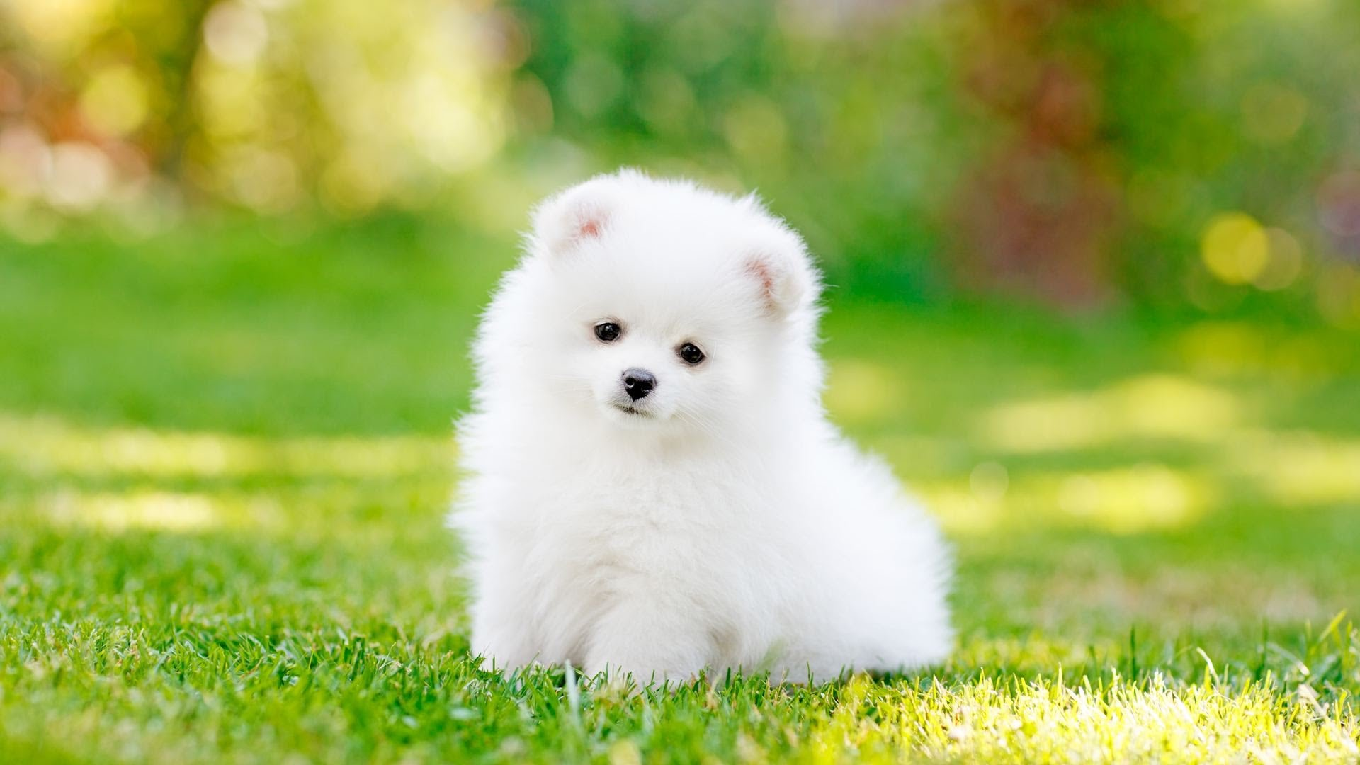 How to Pick the Right Dog for You | Puppy Care 6