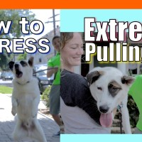 How to Train your Dog to NOT PULL on a Leash! EXTREME LEASH PULLING, BARKING, LUNGING and JUMPING!