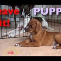 Teach your puppy to 'Leave It'
