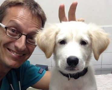 25 Photos That Prove Working At An Animal Hospital Is Totally Awesome 10