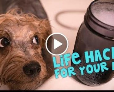 11 Awsome Earthlife Hacks For Your Dog 5