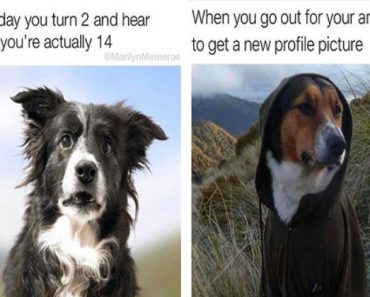 17 Dog Memes That Will Make You LOL Over And Over Again 11