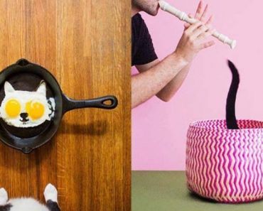 This Cat Owner Has a Great Sense Of Humor And We Love His Instagram Account 9