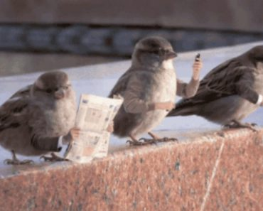 If Birds Had Arms (19 Gifs) 10