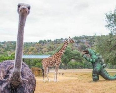 Just 20 Weird Animal Photos We Haven't Quite Figured Out Yet 11