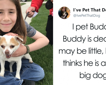 The Internet Is Obsessed With This 9-Year-Old's Twitter Account Where He Reviews All The Dogs That He's Petted 10