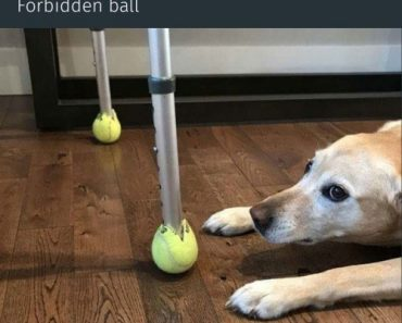 The Forbidden Ball 8
