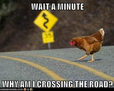 WHY AM I CROSSING THE ROAD? 10