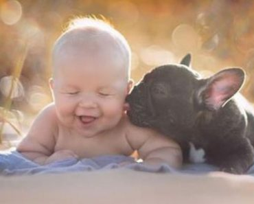 Baby And Bulldog Were Born On The Same Day And Do Everything Together Like Brothers 9