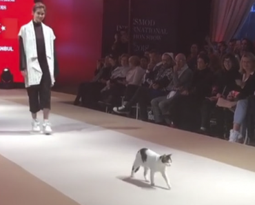 Cat Interrupts Fashion Show, Puts On A Show Of His Own 9