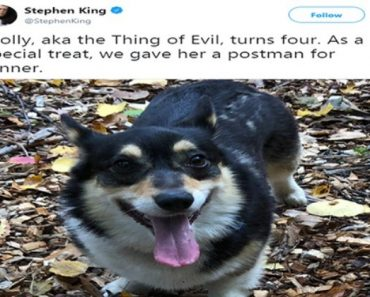 "Stephen King Tweets Hilariously Horror Thoughts About His Corgy AKA ""The Thing Of Evil"" 10"